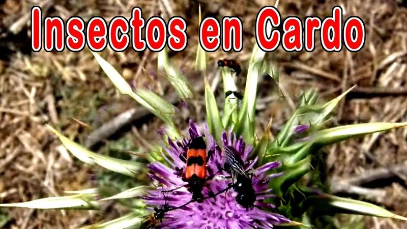 Supervivencia en la naturaleza simbiosis flores insectos polinización insectos polinizadores
