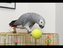 6 Tips For Caring For Parrot Birds