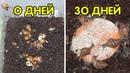 Улитки ахатины ретикулята черноголовая 0-30 дней