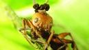 3 маленьких, но ОЧЕНЬ ОПАСНЫХ опасных врага колонии муравьёв!